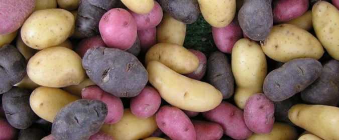 Which potatoes are healthier Sweet Potatoes Or White Potatoes Mevolife