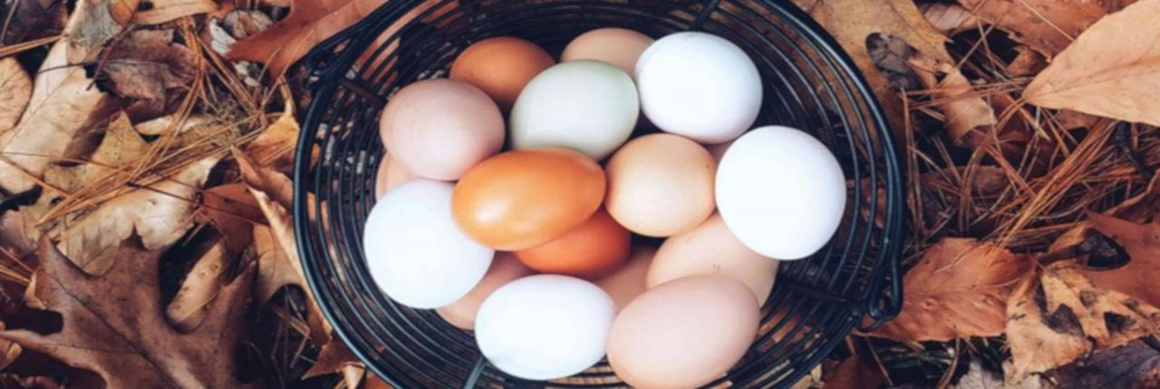 Top 10 Protein-Rich Foods for your physique or Weight loss Mevolife